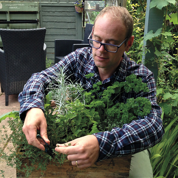 harvesting herbs in pots