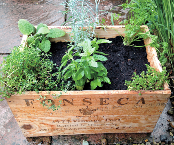 herbs planted in a crate