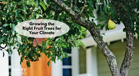 growing the right fruit trees for your climate