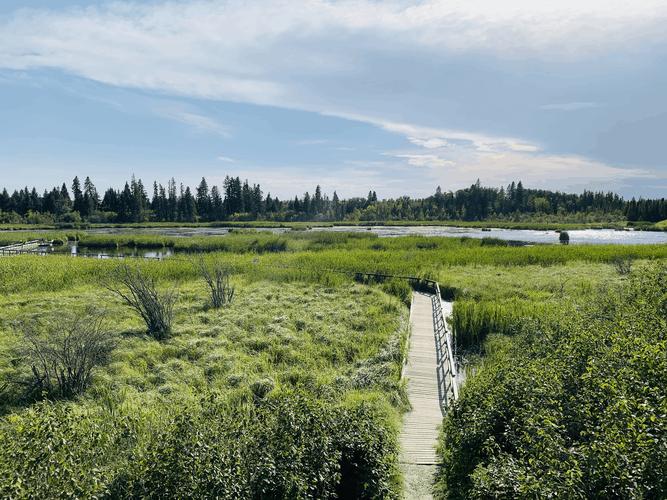 Ominnik Marsh