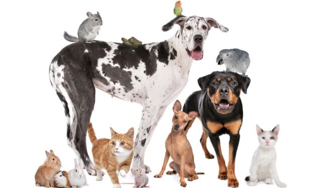 Best Pet Insurance in Canada for 2021