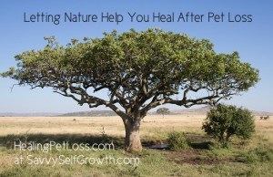 Serengeti-HealingPetLoss at SavvySelfGrowth LT