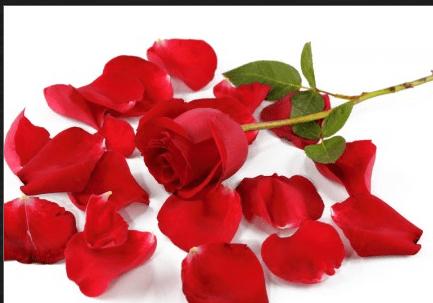 free silk rose petals free shipping hurry