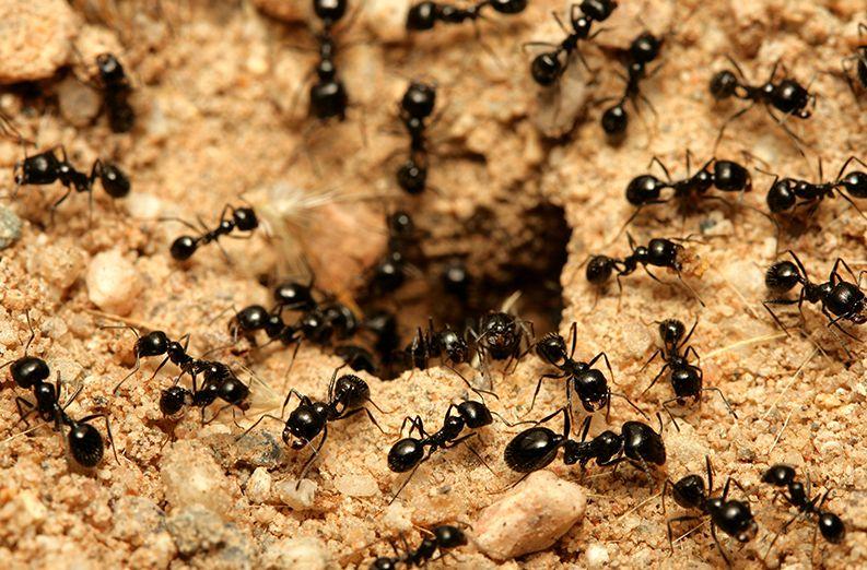 تفسير رؤية النمل الأسود الصغير في المنام للعزباء