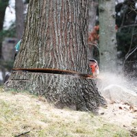 tree removal fort wayne