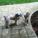 Brody and Maya