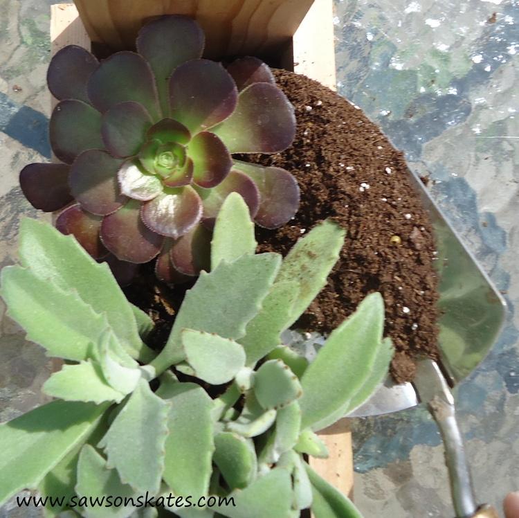 diy tool caddy planter succulents