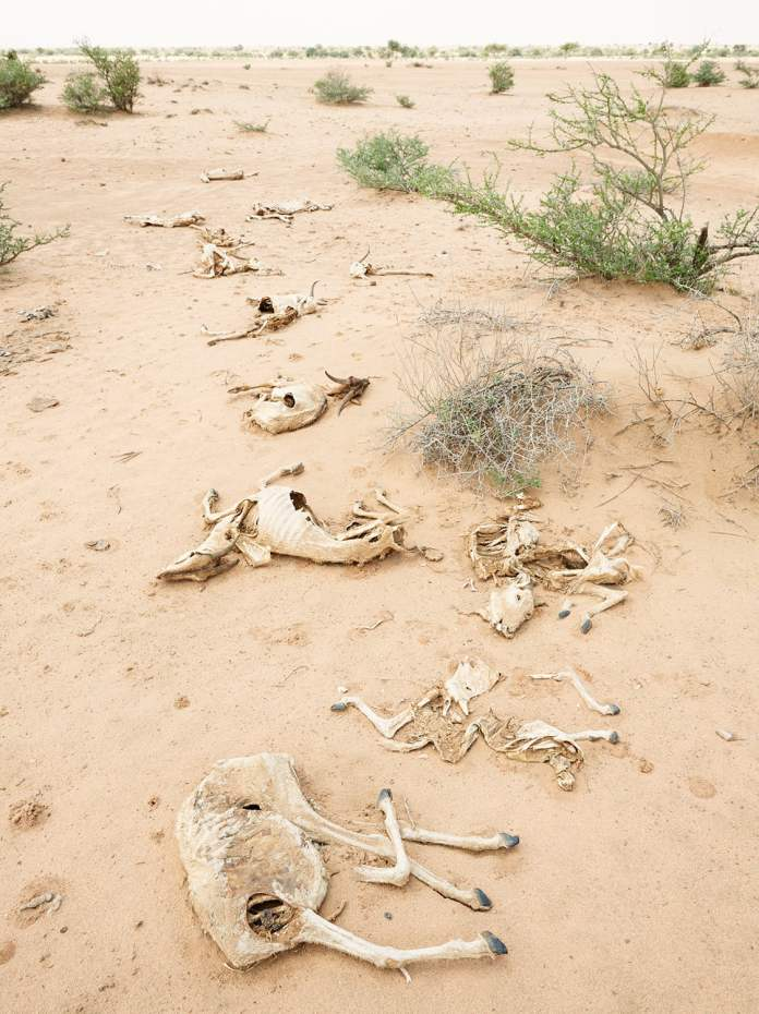 In Somaliland, climate change is now a life-or-death challenge