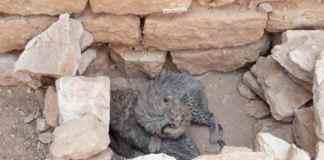 Cheetah Cub Smugglers Jailed For Three Years In Raid On Gulf Gateway