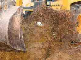 Over 4,000 Damas Trees Uprooted In UAE