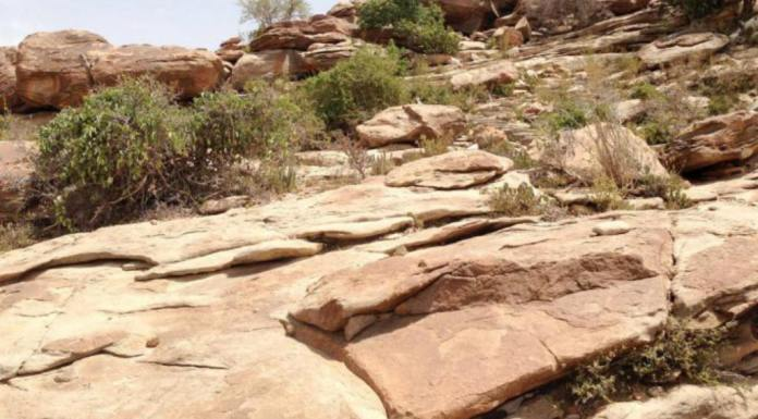 Interesting Facts About The Republic Of Somaliland
