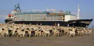 Somaliland Rubbishes Condition Imposed on Export of Livestock During Hajj