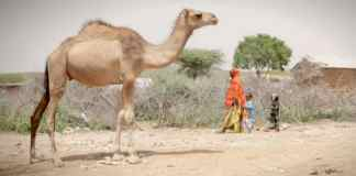 Global warming and Somaliland's climate refugees