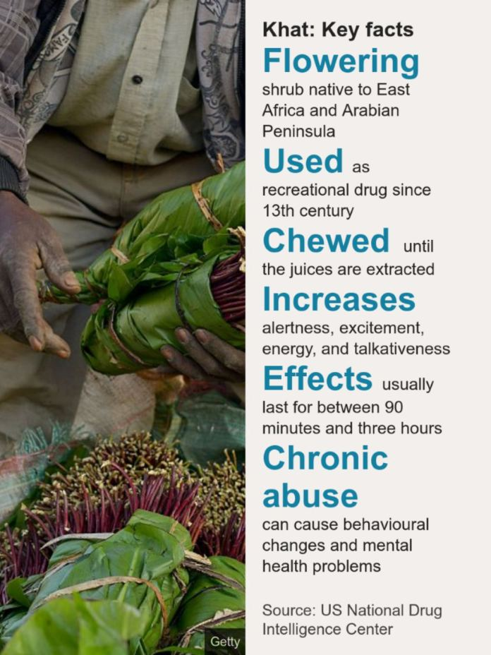 Somaliland And Somalia Why Khat Chewers Have Been Left In A Stew