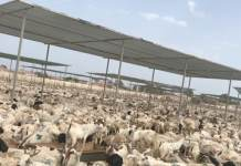 Somaliland And COVID-19 Emerging Issues And Economic Impact