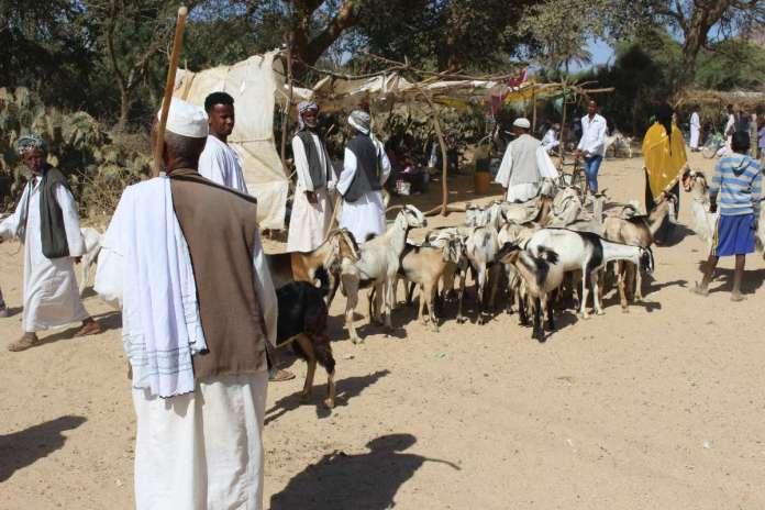 GeoEx Launches Trailblazing Trip To Eritrea, Somaliland And Djibouti