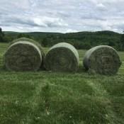 jasper hill hay bales