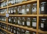 Suki's Dried Herbs and Flowers