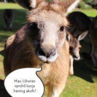 Apply Work and Holiday Visa di Australia
