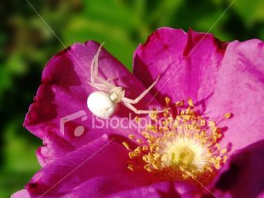 flower_spider.jpg