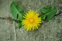 macro flower (1 of 1)