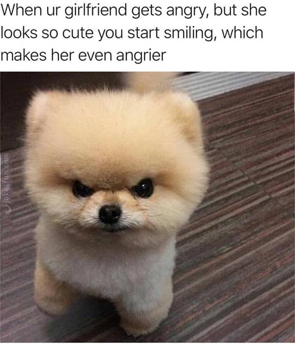 Over 65 Of The Best Funny Dog Memes That Will Have You Laughing Bl