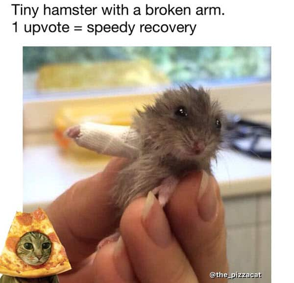 get well soon tiny hamster meme