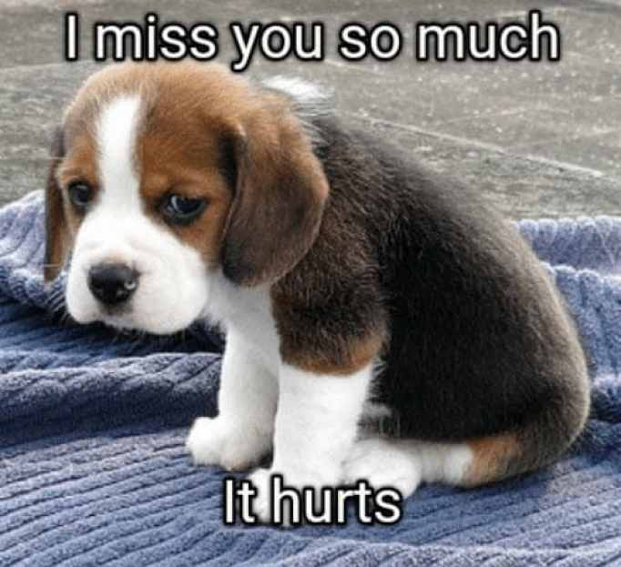 I Miss You So Much Memes