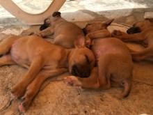 My heaven, the casa had 5 puppies..