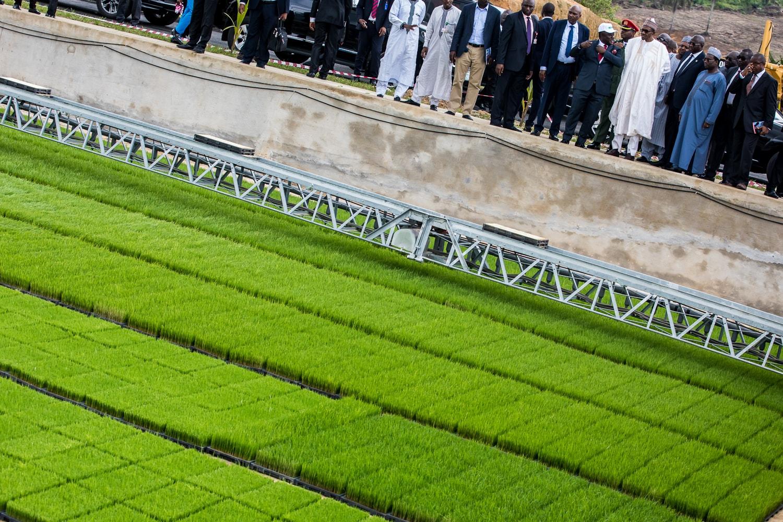 President Buhari Commissions Calabar Rice Seedling Plant