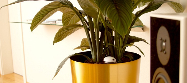 Wifi Plant Sensor placed with the plant