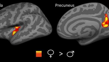 Insula and precuneus regions in the brain