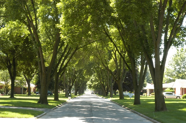 A tree-lined street in Toledo, Ohio in 2006 (Credit: Dan Herms, Ohio State University)