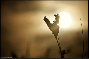 Heart grass (Credit: beau mitchell.)