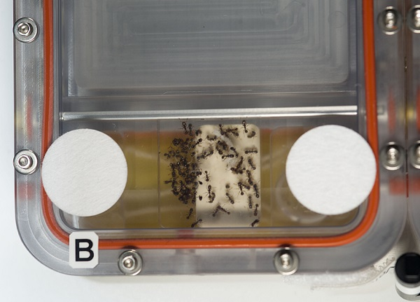 Ant Forage Habitat Facility (Credit: NASA)