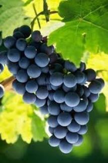Grapes have resveratrol (Credit: Zest-pk/Flickr)