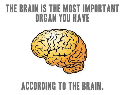 The brain is the most important organ you have, according to the brain.