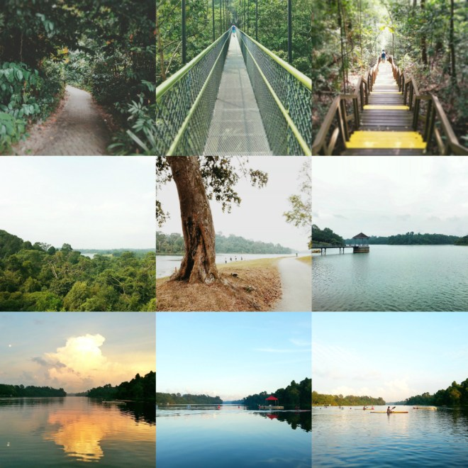 MacRitchie Reservoir Park, Singapore.