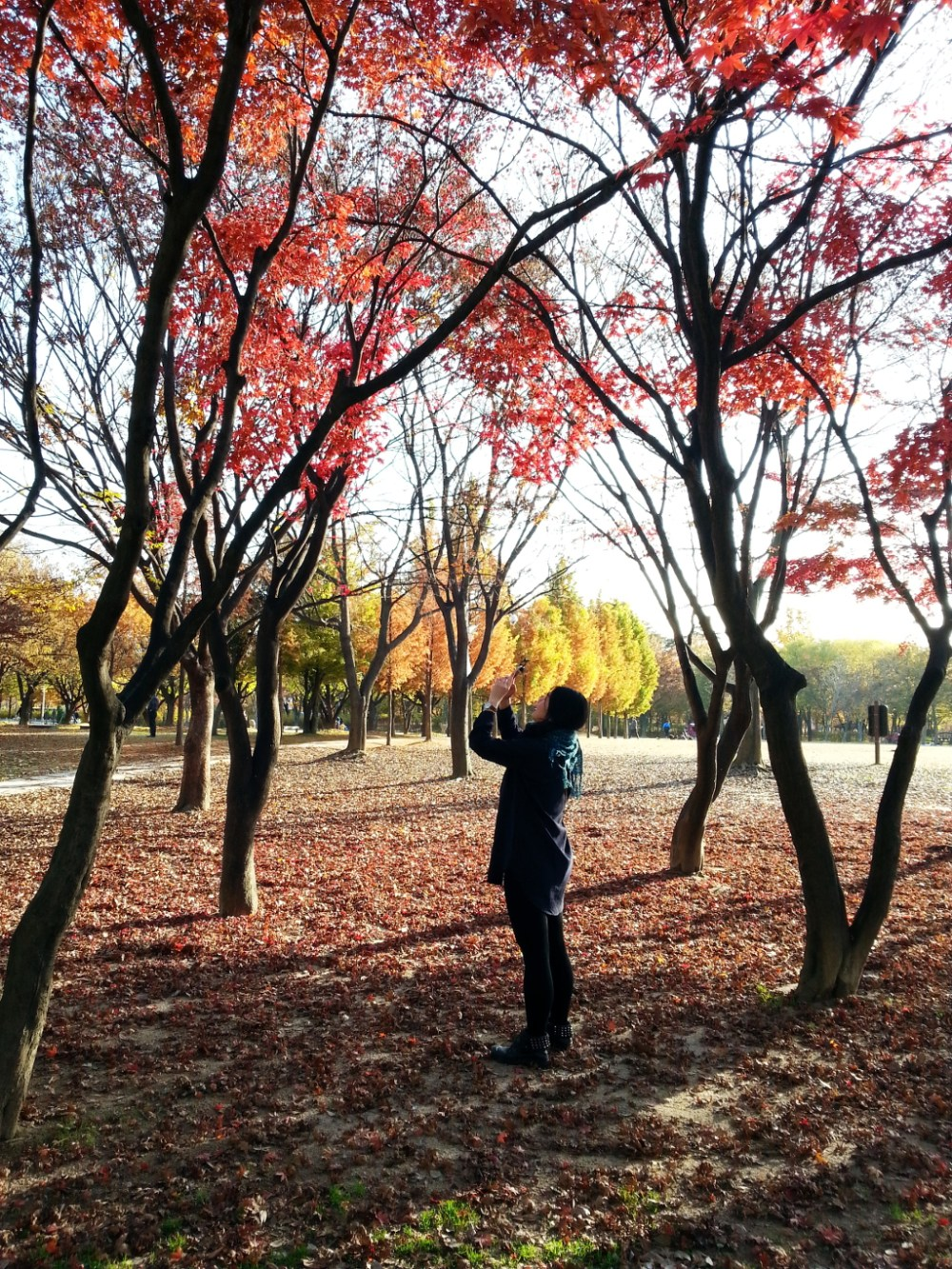 Travel Photographer | Autumn 서울숲 (Seoul Forest) South Korea