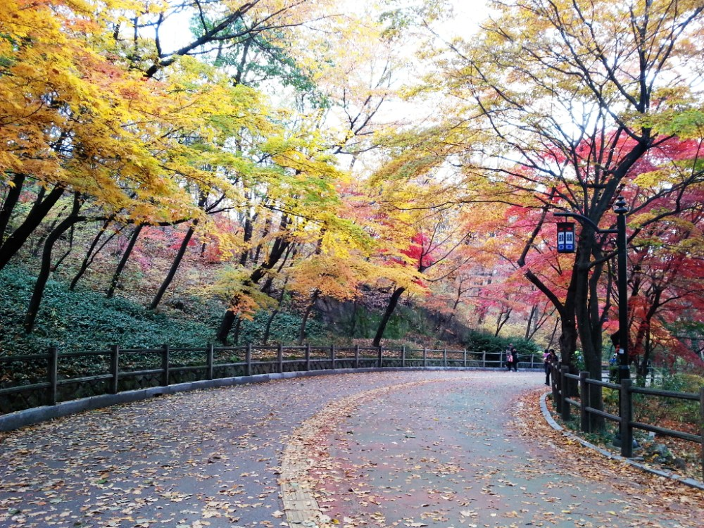 Travel Photographer | Autumn 남산 (Namsan) Seoul South Korea