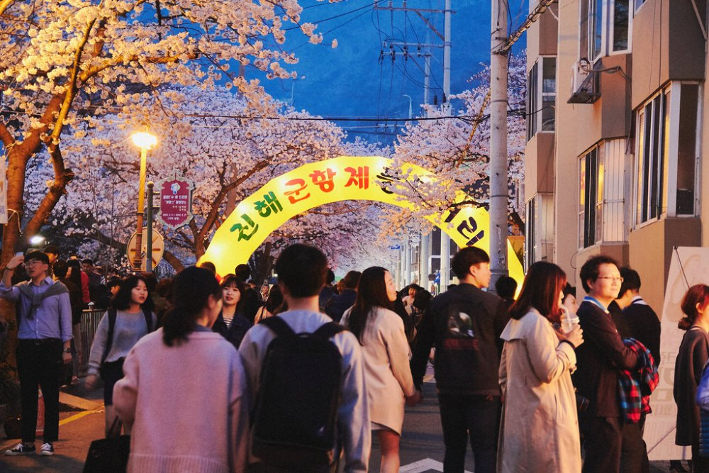 Travel Photographer | Jinhae Cherry Blossom Festival South Korea
