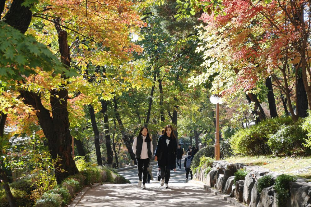 Travel Photographer | Autumn Yonsei University Seoul South Korea