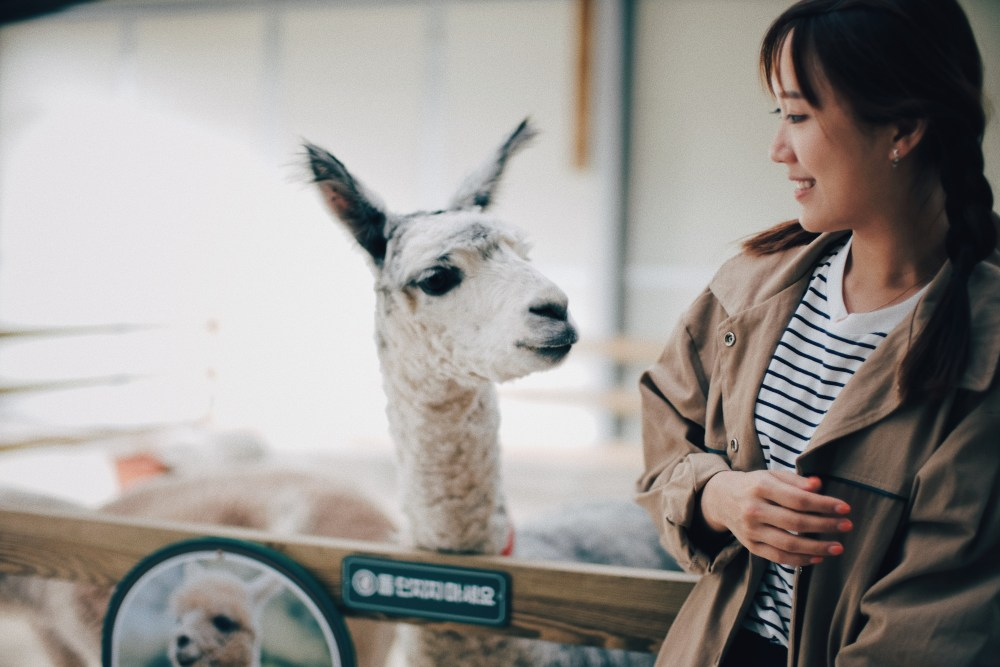 Photographer | Alpaca World South Korea