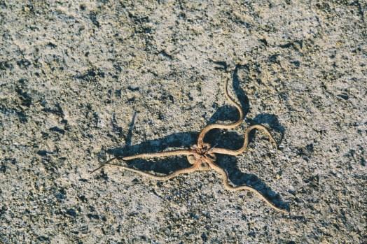 Travel Photographer | Starfish Jeju (제주도) South Korea