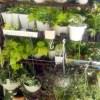植物観察、さあ始動!【oyageeの植物観察日記】