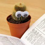 園芸専門用語解説集|園芸やガーデニングでよく耳にする言葉や作業方法などを解説【oyageeの植物観察日記】