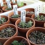 「脇役的存在多年草」の初水やりと、覚えの悪いoyageeの為にネームプレート付け【oyageeの植物観察日記】