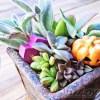 多肉植物の寄せ植え (Halloween ver.)|1か月後の今日は? 1年のうちの2大イベントであるアノ日! 早速、1鉢作っちゃいます!【oyageeの植物観察日記】