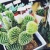 観葉植物→多肉植物→エアプランツときて、次はサボテンか? oyagee、ついに「ボタニカル男子」で「ボタニカル漬けの日々」?【oyageeの植物観察日記】