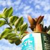 PHOTO ─ タニク心と秋の空 ─ 【oyagee写真館】